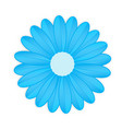 blue flower on white background vector image