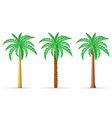 palm tree 29 vector image vector image