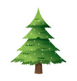 pine tree light decoration merry christmas vector image