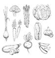 Fresh vegetables sketch for vegetarian food design vector image vector image
