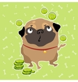 Pug dog finds the money background with bones vector image vector image