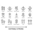 wild flowers linear icons set spring blossom vector image vector image
