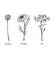 hand drawn of dandelion and dill plants vector image