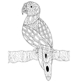 Parrot coloring for adults vector image vector image