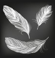 feathers white set collection hand drawn vector image
