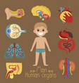 male health poster with human organs vector image