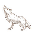 wild animal wolf howling at moon isolated sketch vector image