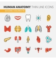Anatomy Thin Line Icons Set with Body Parts vector image vector image
