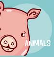pig animal cartoon vector image