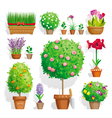 Pot plants set vector image