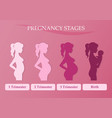 Pregnant woman - first second and third trimester vector image vector image