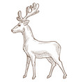 reindeer or deer stag or fawn isolated sketch vector image
