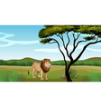 Cartoon Lion Scenery vector image