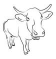close up cow sketch on white background vector image vector image