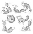 set cartoon foxes collection cute foxes vector image