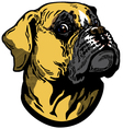 boxer head vector image vector image