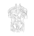 torso muscles front vector image vector image