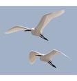 Little Egrets vector image vector image