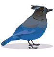 stalker joke bird vector image vector image