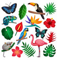 tropical exotic icon set vector image vector image