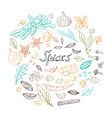 hand drawn set of spices vector image vector image