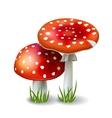 Red Mushroom Amanita vector image
