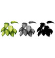 set plant design vector image vector image