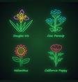wild flowers neon light icons set douglas iris vector image vector image