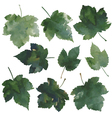 currant leaves vector image