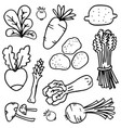 doodle of vegetable hand draw object vector image vector image