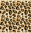 fashionable leopard seamless pattern leopard skin vector image