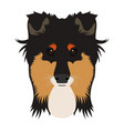 isolated collie avatar vector image