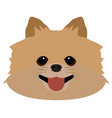 isolated pomeranian avatar vector image