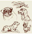 Set of Dogs - Labrador retriever hound pug setter vector image vector image