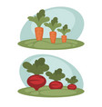 carrot and beet growing vector image