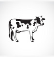 cow on white background farm animal logo vector image vector image