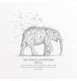 elephant low poly wire frame on white background vector image vector image