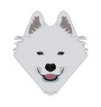 isolated samoyed avatar vector image vector image