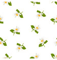 seamless pattern with realistic citrus blooming vector image