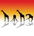 giraffe four silhouette vector image
