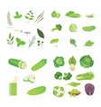 green vegetables and herbes vegeterian fresh food vector image