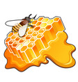 sweet golden honeycomb with puddle honey vector image