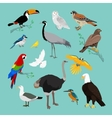 collection various birds flat design vector image vector image