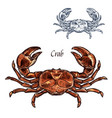 crab lobster seafood isolated sketch icon vector image vector image