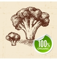 Hand drawn sketch vegetable broccoli Eco food vector image vector image
