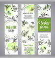 herbs and spices vertical banners herb plant vector image vector image