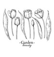 tulip flower and leaves drawing hand drawn vector image vector image