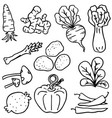 doodle vegetable various set vector image vector image