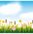 garden flowers and grass field vector image