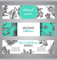 hand drawn herbs and wild flowers banner vintage vector image
